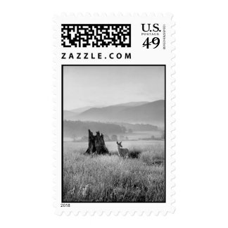 Deer in Cades Cove Tennessee Postage Stamps