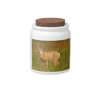 Deer in Field Candy Dish