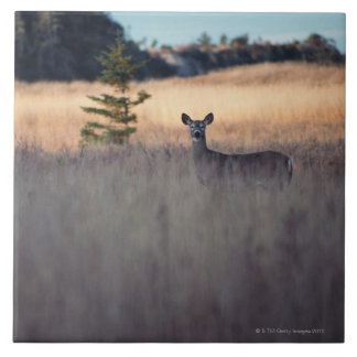 Deer in field of tall grass ceramic tile