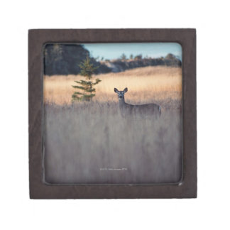 Deer in field of tall grass premium gift boxes