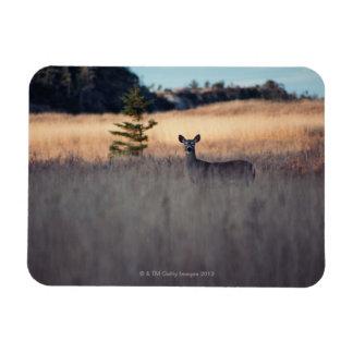 Deer in field of tall grass rectangular photo magnet