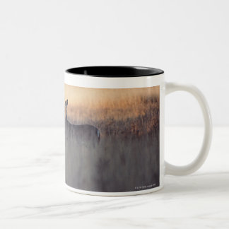 Deer in field of tall grass Two-Tone coffee mug