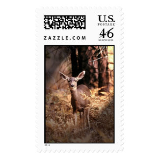 Deer in Forest Stamps