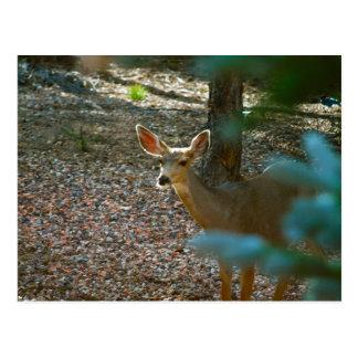 Deer in Forest Sunshine Postcard