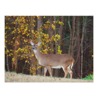 Deer in Front of Yellow Autumn Tree Poster