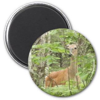 Deer in Hiding 2 Inch Round Magnet