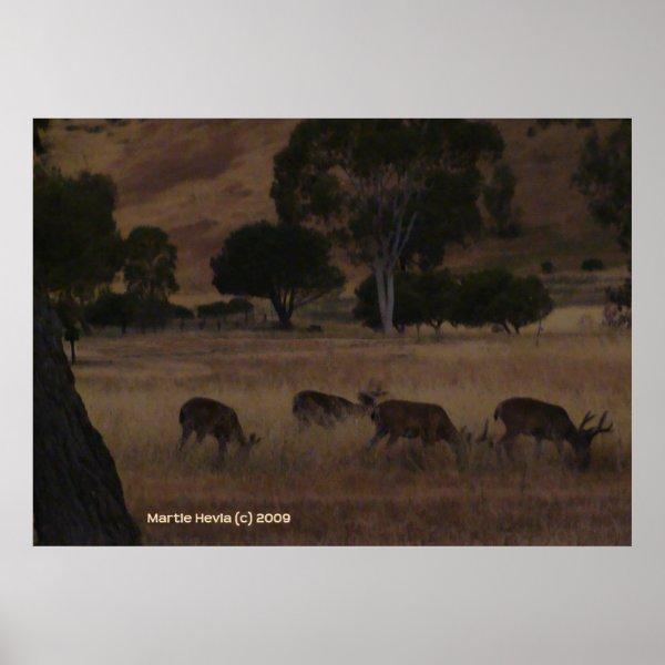 Deer in Hills