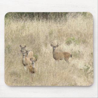 Deer in Meadow Mousepad