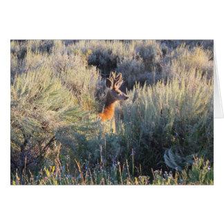 Deer in Sagebrush Greeting Card