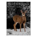 DEER IN SNOW - CHRISTMAS CARDS