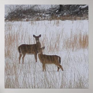 Deer in Snow Poster
