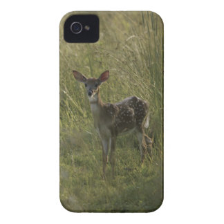 Deer in tall grass iPhone 4 cover