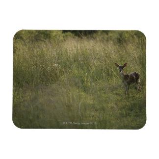 Deer in tall grass rectangular photo magnet