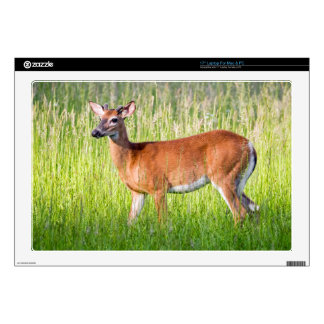 Deer In Tall Grass Skin For Laptop