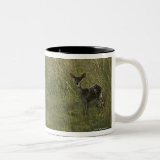 Deer in tall grass Two-Tone coffee mug