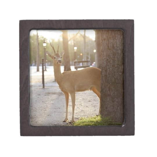 Deer in the city gift box