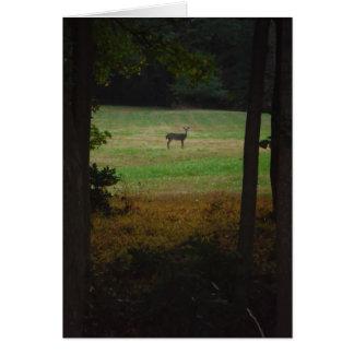 Deer in the Distance Card