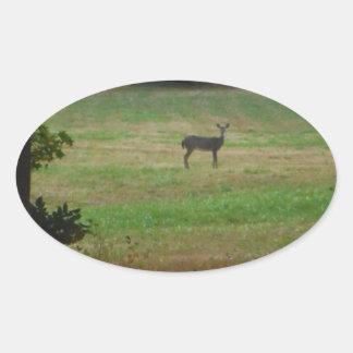 Deer in the Distance Oval Sticker