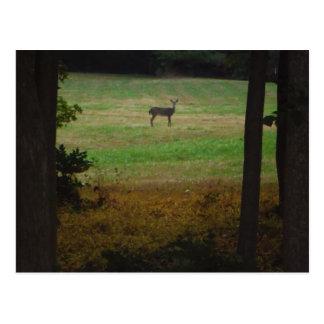 Deer in the Distance Postcard
