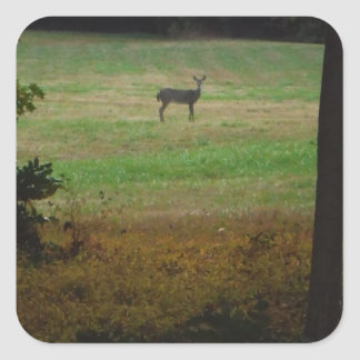 Deer in the Distance Square Sticker