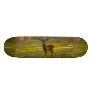 Deer in the fields skateboard deck