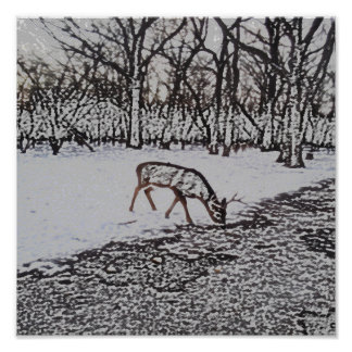 Deer in the Forest Posters