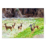 Deer in the Frost Greeting Card