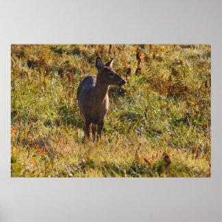 Deer In The Meadow Print