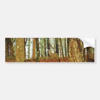 Deer in the Misty Pines Bumper Sticker