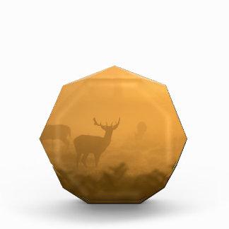 Deer in the Morning Glow Acrylic Award