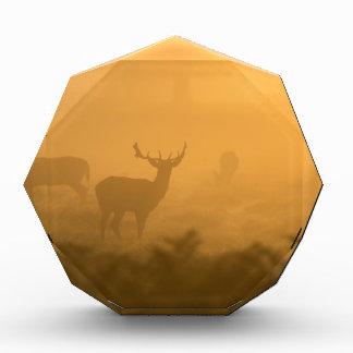Deer in the Morning Glow Award