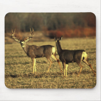 Deer In The Morning Meadow Mouse Pad