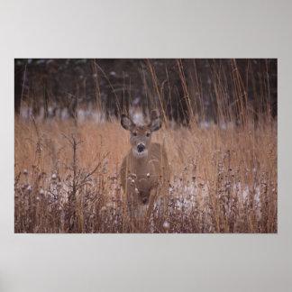 Deer in the park posters