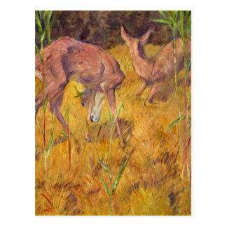 Deer in the reed by Franz Marc Postcard