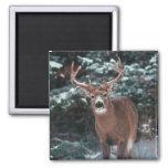 Deer in the Snow Magnet