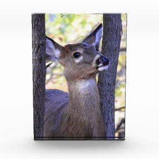 Deer in The Woods Award