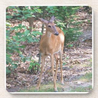 Deer in the woods drink coaster