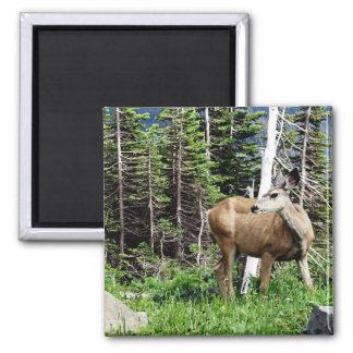 Deer in the Woods 2 Inch Square Magnet