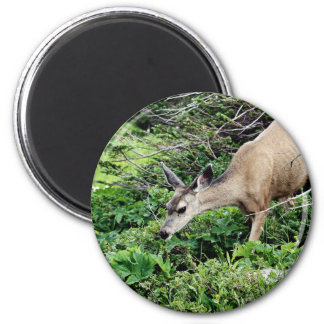 Deer in the Woods 2 Inch Round Magnet