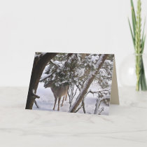 Deer in the Woods Photograph Greeting or Note Holiday Card