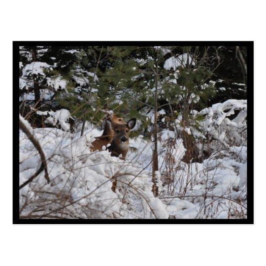 Deer in the Woods Postcard