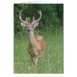 Deer in Velvet Greeting Cards