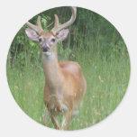 Deer in Velvet Round Stickers