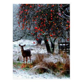 Deer in Winter Postcard