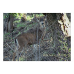 Deer in Woods - Select Your Frame Print