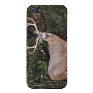 Deer iPhone 4 Speck iPhone SE/5/5s Cover
