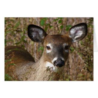 Deer joven Dia del Padre Tarjeta De Felicitación
