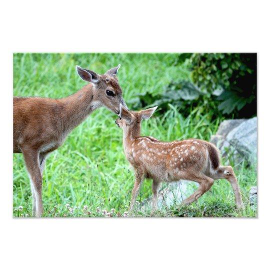 Deer Kissing Fawn Photo Print