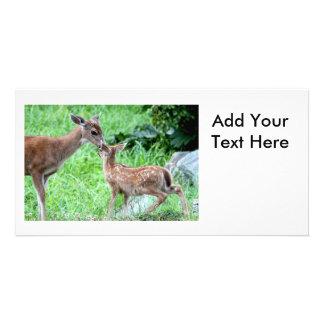 Deer Kissing Fawn Photo Card