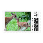 Deer Kissing Fawn Postage Stamp
